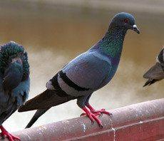 wisconsin bird control, milwaukee bird control, bird services, bird exterminator, bird removal, bird control in milwaukee, bird control in wisconsin, bird control