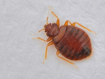 bed bug inspection, wisconsin bed bug inspection, milwaukee bed bug inspection, bed bug inspection in wisconsin, bed bug inspection in milwaukee, bed bug inspection services, bed bug inspection control, bed bug inspection removal