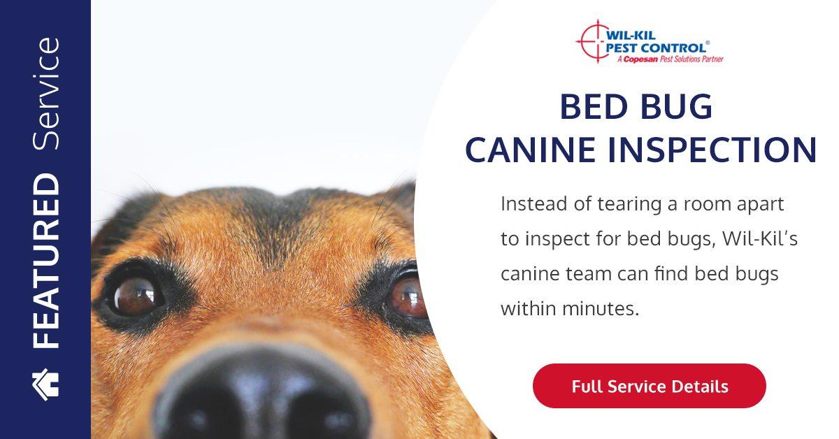 Bed Bug Dog Inspection Canine Inspection Wil Kil Pest