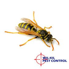 Three Common Bees You Can Find In Wisconsin Wil Kil Pest
