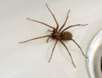 home spider control, home spider removal, home spider exterminator, home spider services, spiders