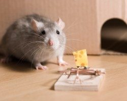 Residential Pest Control And Home Inspections Wil Kil