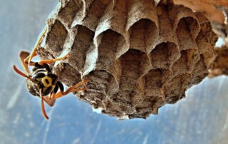 wasp nest removal wasp control