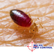 Wil Kil Advises Winter Travelers To Brush Up On Bed Bug