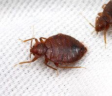 conventional-bed-bug-treatments