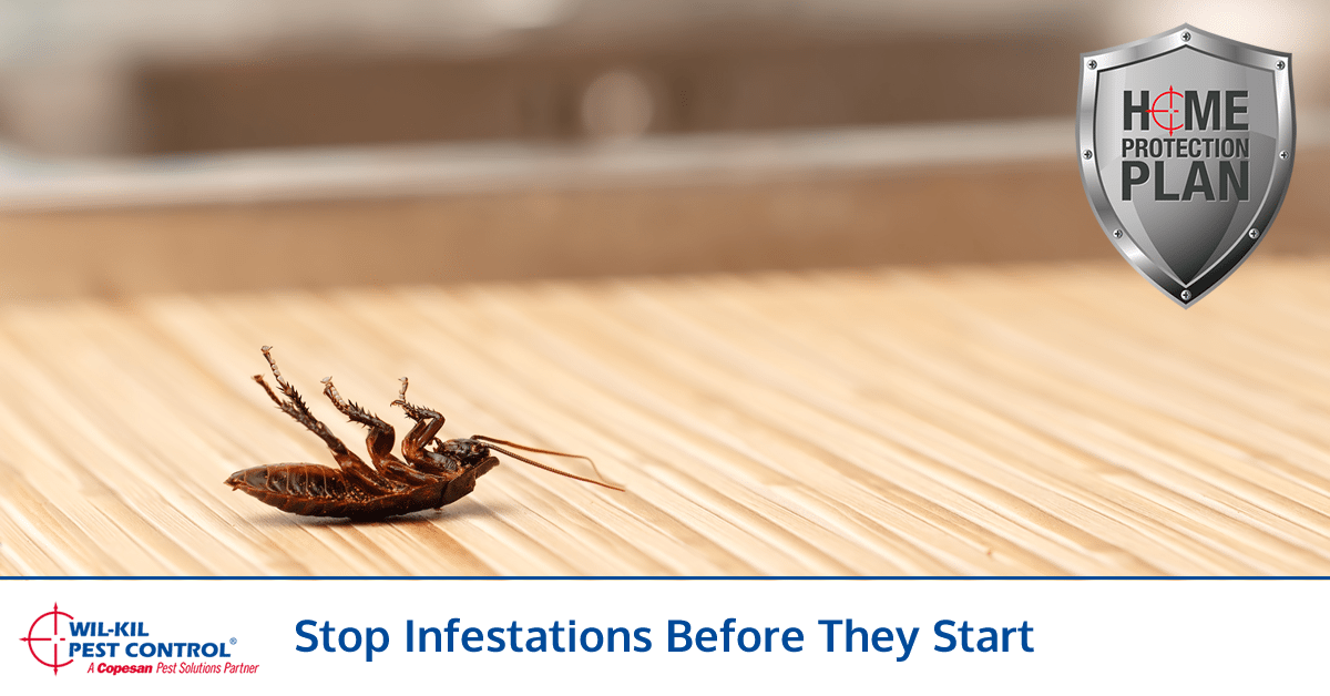 State Inspection Coupon >> Total Home Protection Savings | Wil-Kil Pest Solutions